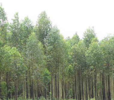 GST Rate of 5% applicable onpulp wood in terms of Chapter 4401 : AAR